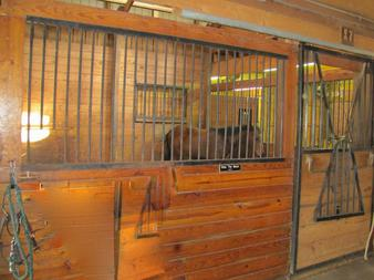 Jane Nordstrom Training clients have indoor access to a 80x200 indoor arena.